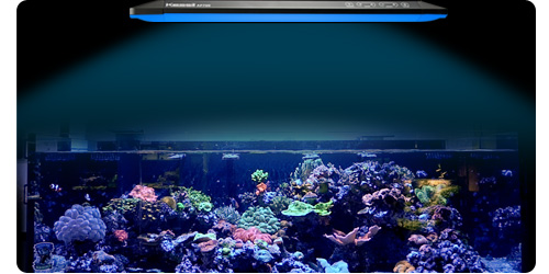 Kessil AP700 LED Light